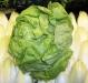 Hydroponic Green Lettuce